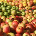 Conserver du jus de pomme sans pasteurisation