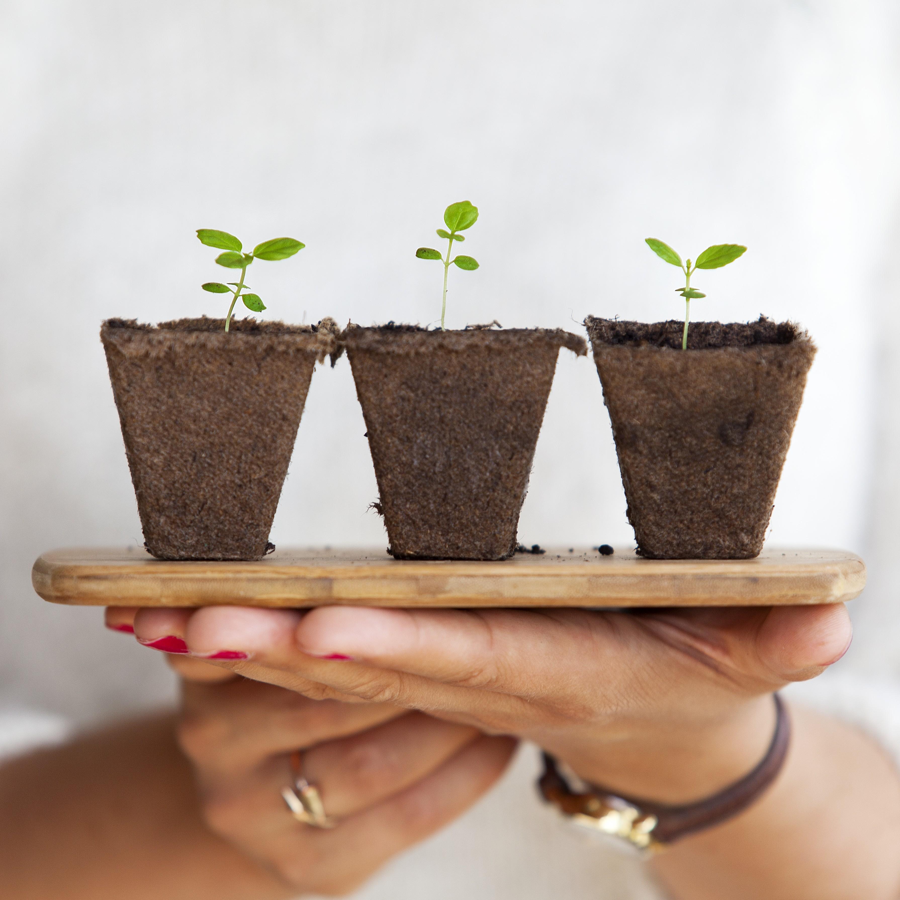 calendrier des semis au potager - city plante guide de permaculture