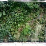 Mur végétal : une idée de décoration originale