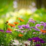 Signification des couleurs des plantes et des fleurs