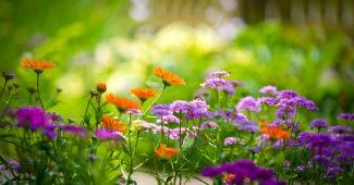 Signification des couleurs des plantes et des fleures