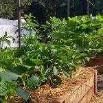 La rotation des cultures : une bonne méthode pour jardiner bio