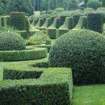 L'art topiaire ou comment sculpter ses arbres