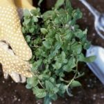 Jardinage bio : peut-on utiliser des graines non bio?