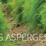 FERTILISER LES ASPERGES