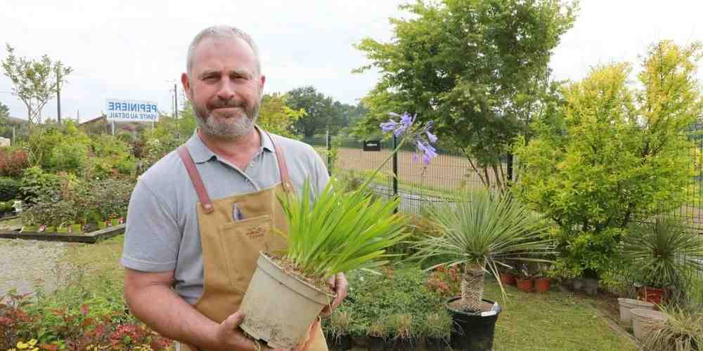 Comment acheter des plantes?