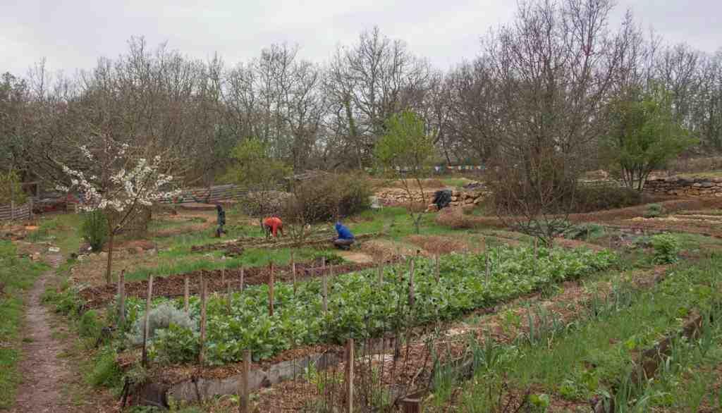 Quand commencer à préparer votre jardin?