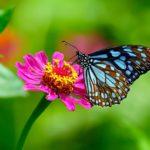 8 espèces étonnantes de papillons