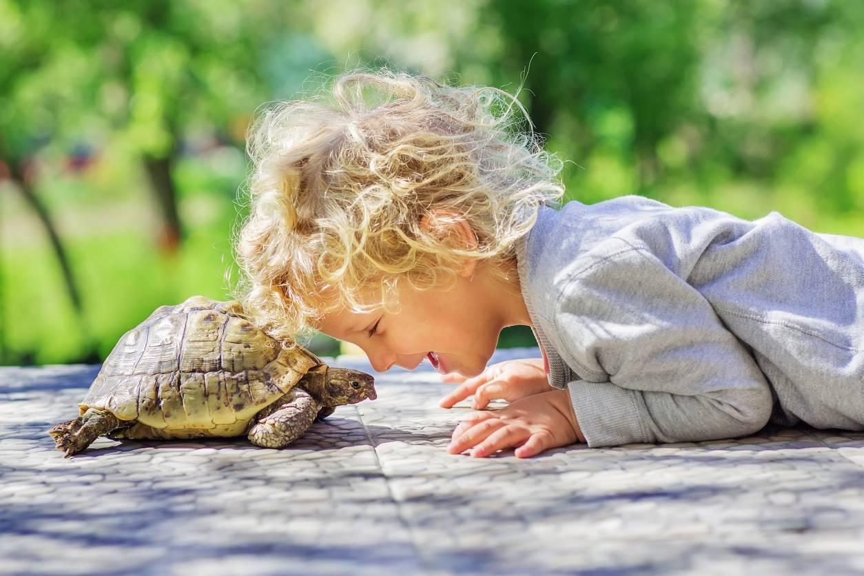 déco chambre d'enfant sur le thème des tortues