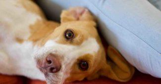 Comment adopter un chien dans un refuge ?