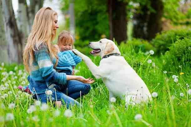 Comment avoir un chien gratuit ?