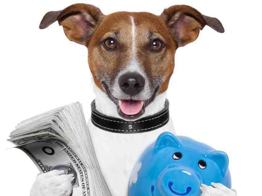 Comment avoir un chien pour pas cher ?
