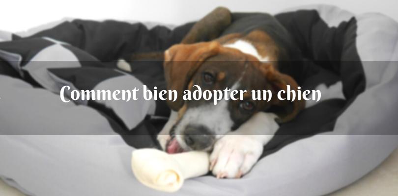 Comment choisir son chien dans un refuge ?