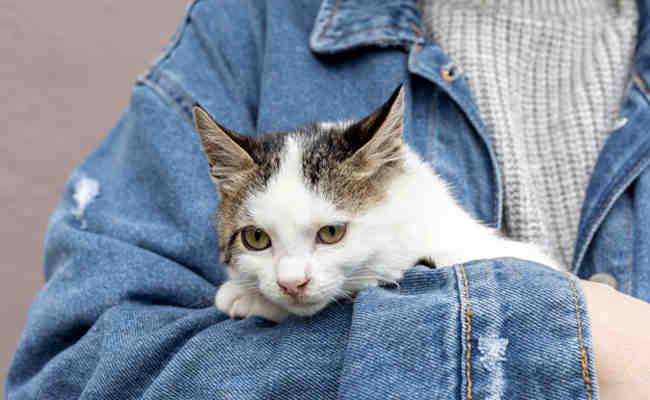 Où Peut-on adopter un chaton ?