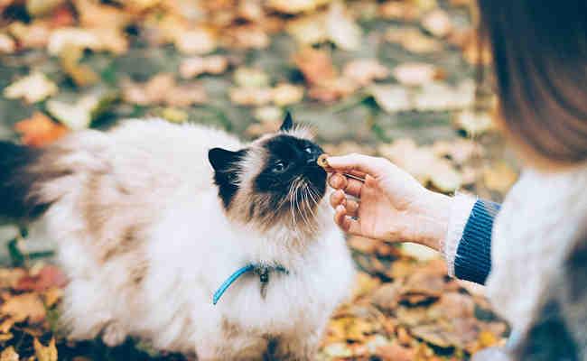 Où Peut-on adopter un chaton gratuitement ?