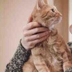 Où s'adresser pour adopter un chaton ?