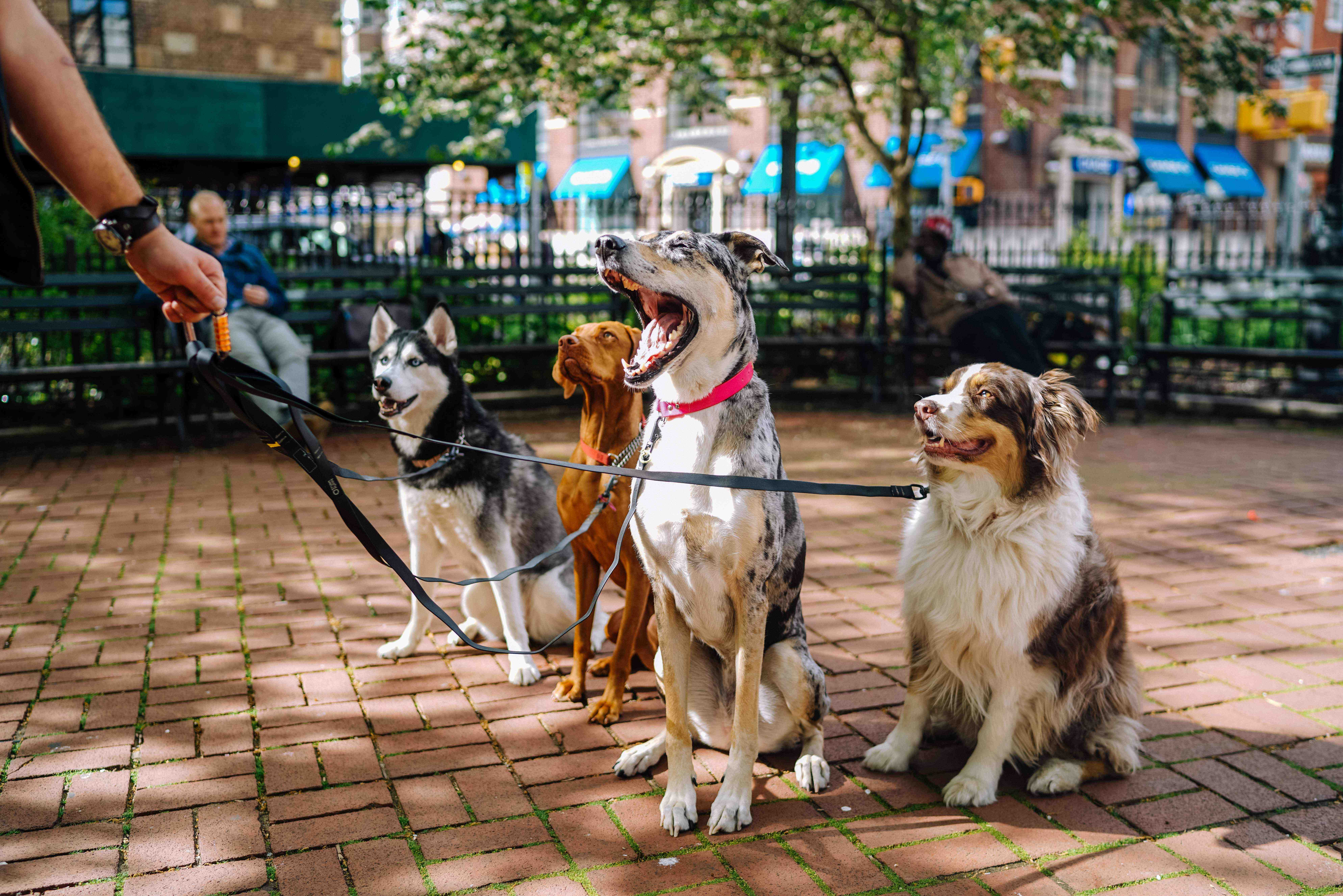 Quel chien Peut-on emmener partout ?