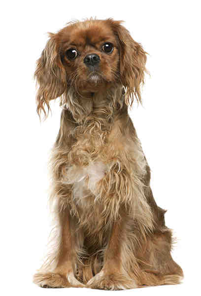 Quel chien à la retraite ?