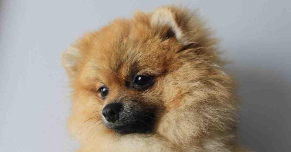 Quel chien est le plus beau du monde ?
