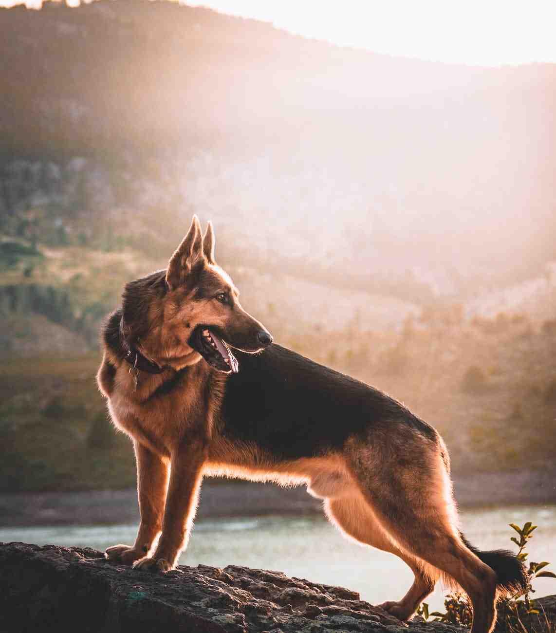 Quel chien mort le plus fort ?