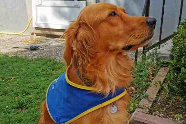 Quel chien pour un retraité actif ?