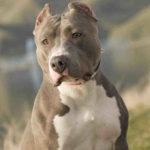 Quel est la race de chien la plus belle du monde ?