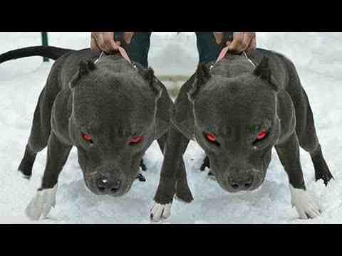 Quel est le chien le plus dangereux du monde entier ?