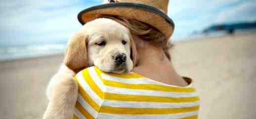 Quel est le chien le plus facile à dresser ?