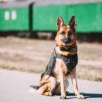Quel est le chien le plus gentil du monde ?