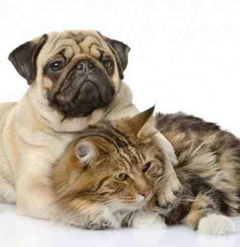 Quel est le chien le plus obéissant ?