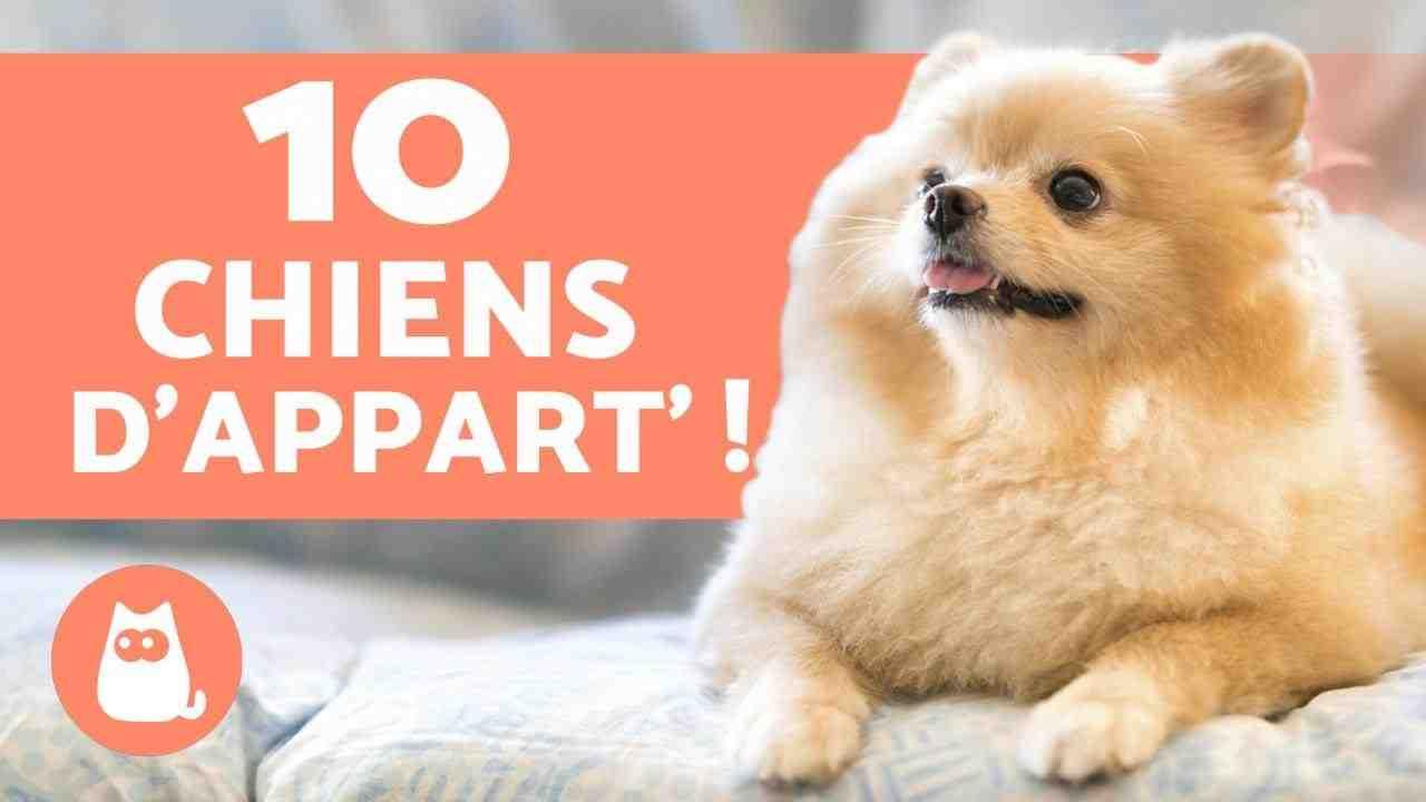 Quel est le meilleur chien de garde et de compagnie ?