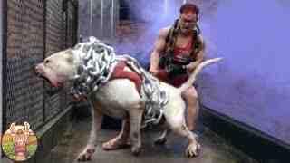 Quel est le pire chien au monde ?