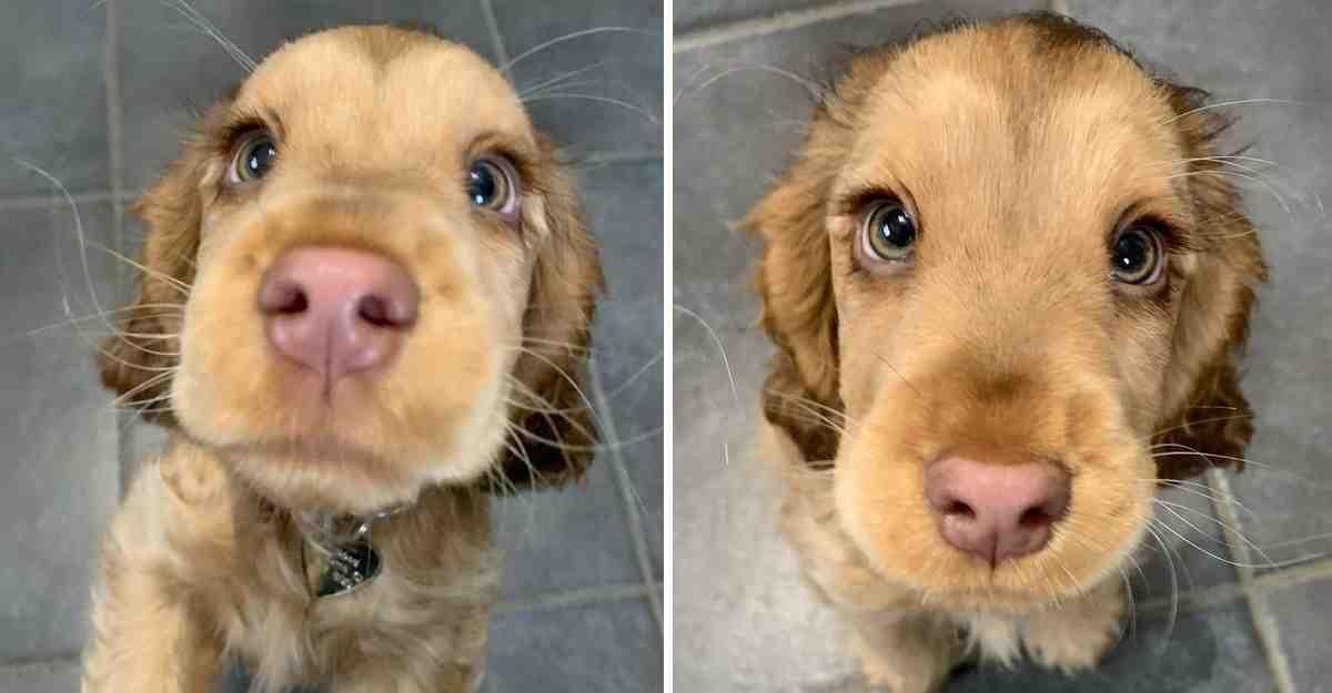 Quel est le plus beau chien du monde 2020 ?