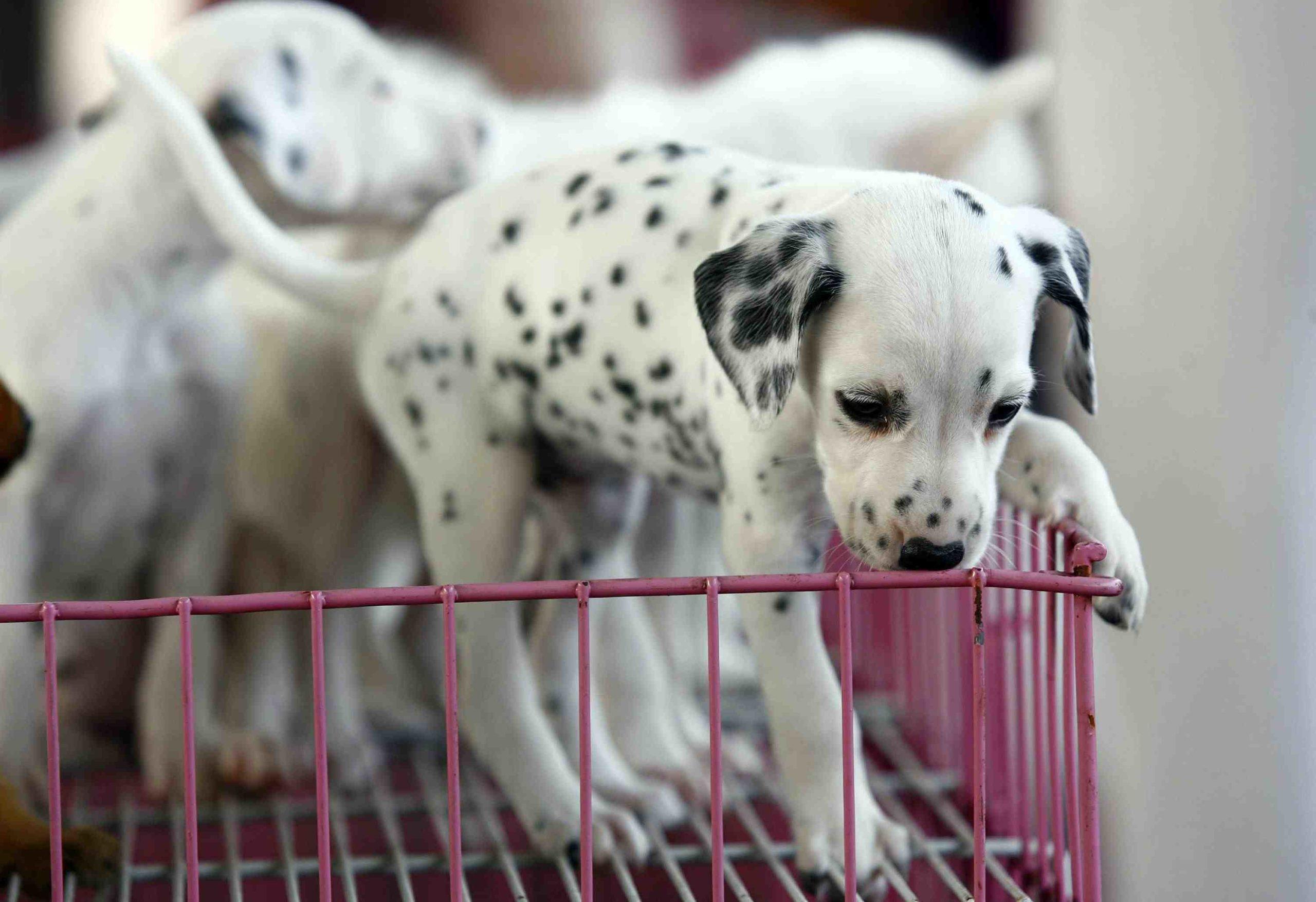 Quel site pour adopter un chien ?