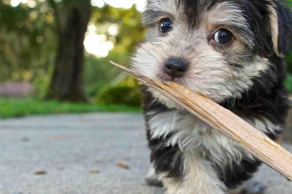 Quel site pour don de chien ?