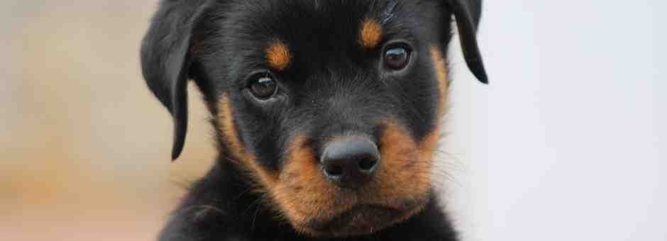 Quel sont les chien a adopter ?