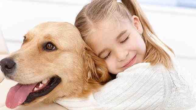 Quelle est la meilleure race de chien de compagnie ?