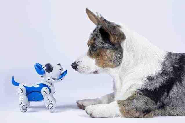 Quelle est le chien le moins cher ?