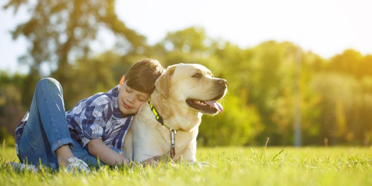 Quelle est le meilleur chien de compagnie ?