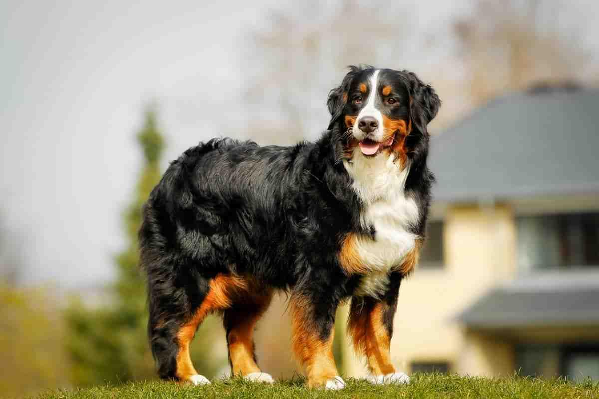 Quelle est le plus beau chien ?