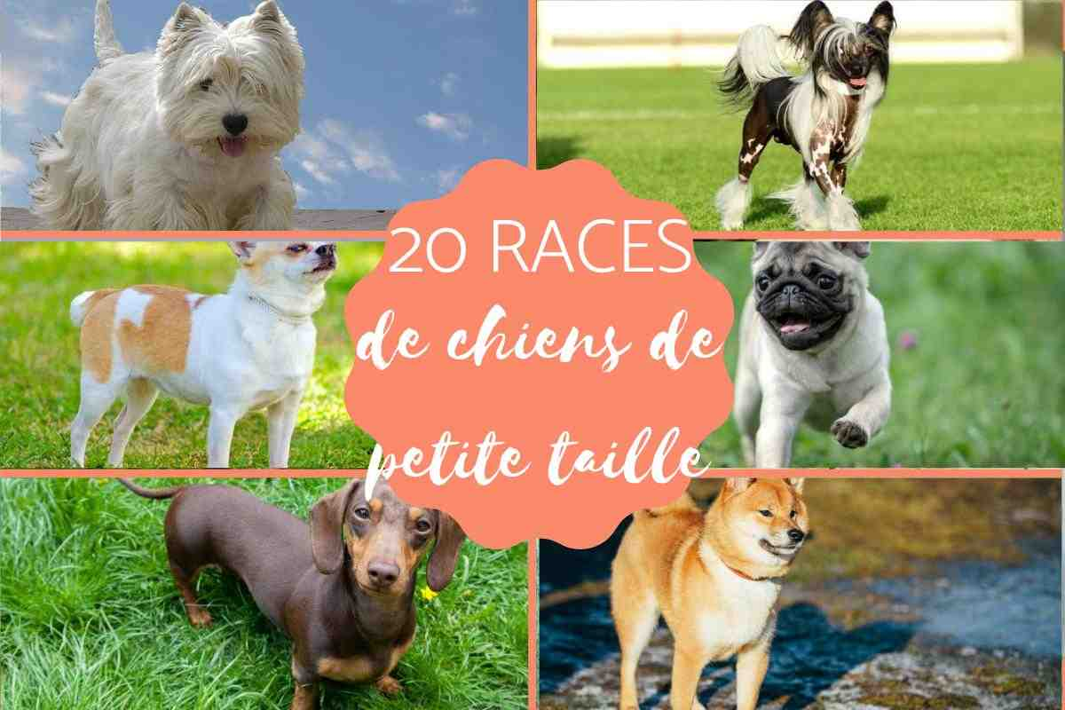 Quelle race de chien est la moins chère ?