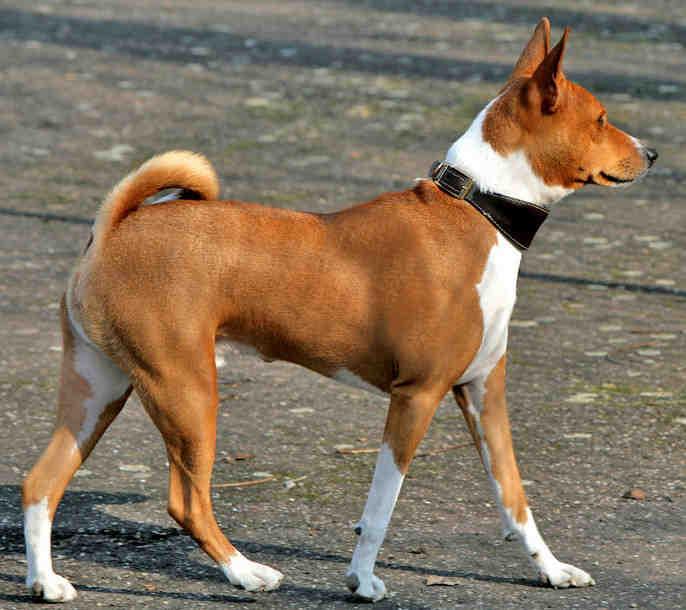 Quelle race de chien le plus dangereux au monde ?