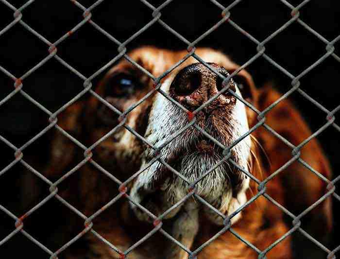 Quelles sont les conditions pour adopter un chien ?