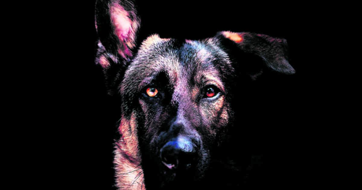 Quels sont les 10 chiens les plus dangereux au monde ?