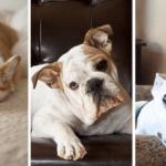Quels sont les chiens les plus facile à vivre ?